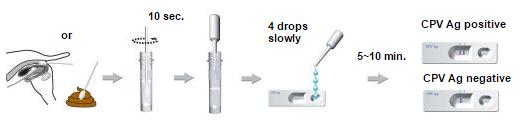 Canine Parvovirus Test Procedures