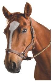 Horse Ketoprofen V